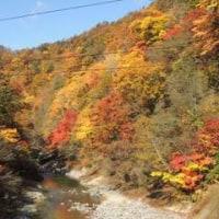 恵庭や支笏湖の紅葉がピーク