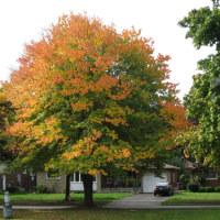 秋 の 色 / Koloro de Aŭtuno
