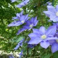 春の花・・・きれい