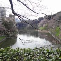 その場考学との徘徊(22) 桜、誘われ