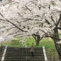 -桜咲く思い出-