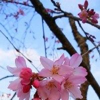 桜と花子ちゃん