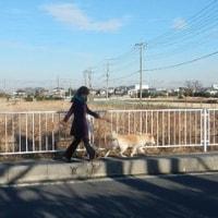 ミセス日本グランプリ様より、保護犬猫たちへ寄付とボランティア活動を・・。