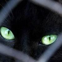 「黒猫は縁起悪い」は迷信、イタリアで啓発イベント