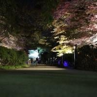 弘前公園ライトアップ開催中