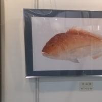 平成29年度拓正会魚拓(29年フイッシングショーより)
