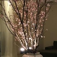 桜が見たい