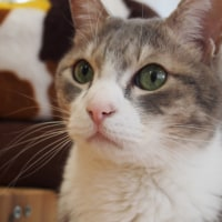 保護猫カフェ・ブラン