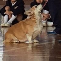 今年初の小学校訪問♪
