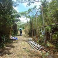 N1裏近くの作業ヤード造成のために伐採された松の木。