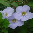 奄美大島へ行ってきました その2 田中一村とお花
