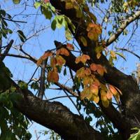 山王森の秋