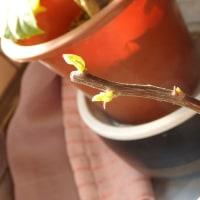 過保護の花が咲いた