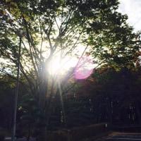 お邪魔しました😆マルクト朝市