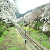 2017年5月ハロー通信【桜まつり】staff石橋