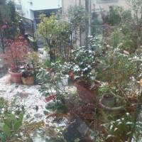 桜島に冠雪