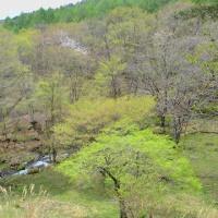 昨日より今日、日々緑広がる午後の森渓谷。