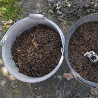 ジャガイモの植え付け、今年は一工夫。逆さま植えが多収穫って本当…