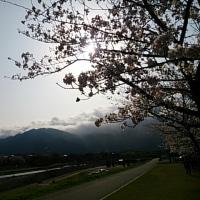 桜2017ラスト