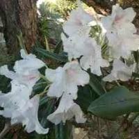 🎵 京都 ・ 喜楽本舗の 「巾着 あん桜」、 あなたのために!って…