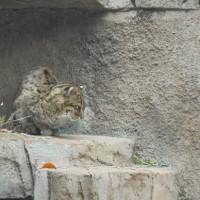 天王寺動物園と串カツ