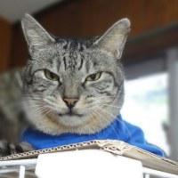 猫の日記念、お気に入りの1枚