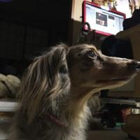 美犬でしょ?