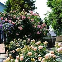 『季節の花』 迎賓館