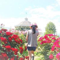 薔薇色のじかん。