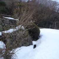 庭先の猫柳