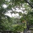 浜松市の浜松城公園で
