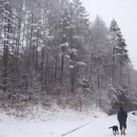雪の中をお散歩・・・♪