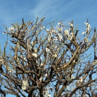 俳句を学ぶ 1(春の雁)