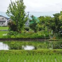 久しぶりの雨で、雨上がりの景色が新鮮に見えます・・・富山市水橋