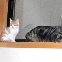 トビオとソラン