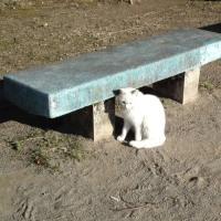 ฅฅฅฅฅฅ♡★ 明日は、猫の日 ???・・・★ 222・・・(○`ω´○)ฅ