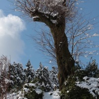 3月9日 白馬村の雪景色