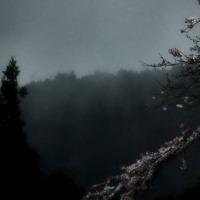 桜林 漂泊