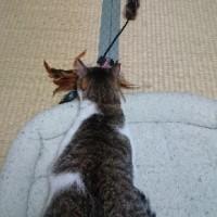 猫と猫のおもちゃ