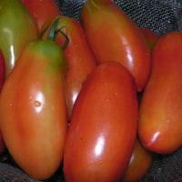 菜園イタリアーノ(2)