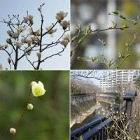 春の色合い