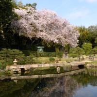 岡山後楽園の桜2017メモリー