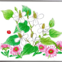 真っ白い花が 美しい