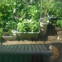 補助花壇撤去