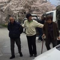 桜追いかけて