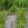 小雨の中歩いてみた・・・雨竜沼湿原