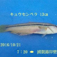 笑転爺の釣行記 10月21日☁ 浦賀・長瀬