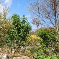 「薬剤耐性菌」増加に警鐘 抗生物質の使い過ぎ原因/冬に備えて庭木の剪定。