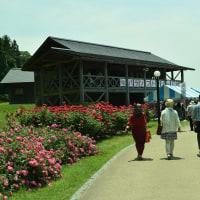 今が満開の村山バラ公園