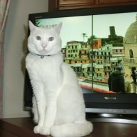 イタリアの猫とマリン
